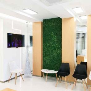 Decorative Scandinavian Moss for Dental and Dermatological centers