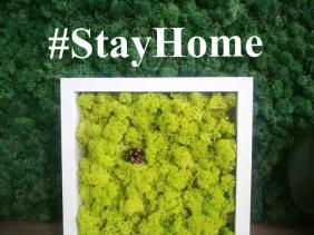 Stay at home and enjoy your living space greener than ever!