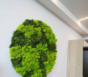 MOSS circle for home decoration