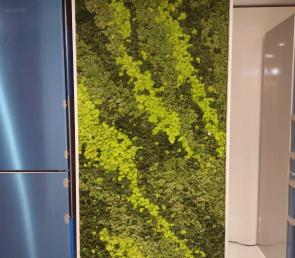 Green wall mix of three colors preserved moss