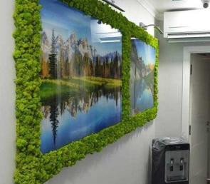 Green decorations of preserved moss in a dental clinic (ref. Dubai)